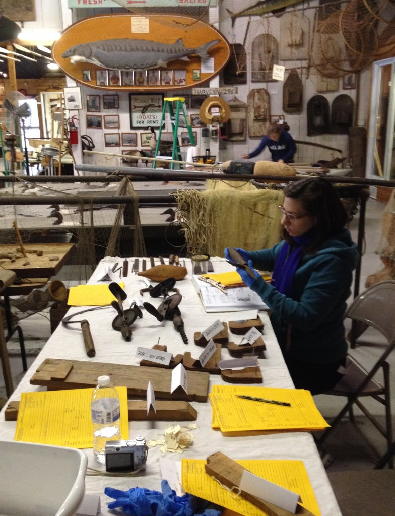 This is a picture of me seated at a long table at right. I am holding a late-nineteenth- or early-twentieth-century tool, which I am looking at. There are other artifacts on the table along with bring yellow cataloguing sheets. There is a large fish mounted to the wall in the background.