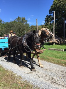 Horse-drawn carriages at Landis Valley (October 2015)